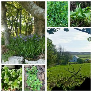 Kilchrist Castle Cottages and surrounding wild greens